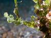 I'm Algae (Gomen S) Tags: animal wildlife nature macro cmc nauticam asia tropical 2017 afternoon indonesia travel sony sonyflickraward ocean rx100v underwater