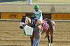 "2017-12-26 (8) r2 Elvis Trujillo on #8 No More Excuses (JLeeFleenor) Tags: photos photography ""laurel park"" maryland md ""maryland races"" horse jockey جُوكِي ""赛马骑师"" jinete ""競馬騎手"" dżokej jocheu คนขี่ม้าแข่ง jóquei žokej kilparatsastaja rennreiter fantino ""경마 기수"" жокей jokey người horses thoroughbreds equine equestrian cheval cavalo cavallo cavall caballo pferd paard perd hevonen hest hestur cal kon konj beygir capall ceffyl cuddy yarraman faras alogo soos kuda uma pfeerd koin حصان кон 马 häst άλογο סוס घोड़ा 馬 koń лошадь laurelpark marylandraces races outdoors outside winter cold"