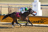 "2017-12-26 (7) r2 Elvis Trujillo on #8 No More Excuses (JLeeFleenor) Tags: photos photography ""laurel park"" maryland md ""maryland races"" horse jockey جُوكِي ""赛马骑师"" jinete ""競馬騎手"" dżokej jocheu คนขี่ม้าแข่ง jóquei žokej kilparatsastaja rennreiter fantino ""경마 기수"" жокей jokey người horses thoroughbreds equine equestrian cheval cavalo cavallo cavall caballo pferd paard perd hevonen hest hestur cal kon konj beygir capall ceffyl cuddy yarraman faras alogo soos kuda uma pfeerd koin حصان кон 马 häst άλογο סוס घोड़ा 馬 koń лошадь laurelpark marylandraces races outdoors outside winter cold"