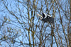 DSC_4978 (rtatn8) Tags: springwelllake rickmansworth hertfordshire england uk bird greyheron ardeacinerea flikr