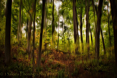 Woods Beyond the Dream (HSS) (13skies) Tags: woods trail conservation wooded blur effect photoshop elements layermask adding takingaway effects fun visual leaves trees postprocessing bambootablet drawingtablet