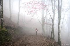 De paseo por el bosque (Jabi Artaraz) Tags: jabiartaraz jartaraz zb euskoflickr bosque nature niebla bruma hayas hayedo pagoak pagadiak