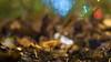 A. Schacht Ulm Travenar R 90 mm f/ 2.8 - DSCF3578 (::Lens a Lot::) Tags: a schacht ulm travenar r 90 mm f 28 60s   16 blades aperture exakta mount paris 2018 classic prime lens profondeur de champ effet fungus mushroom macro bois oiseau animal arbre flou bokeh depth field color night public light rose green yellow orange blue red pink purple vintage manual ciel german