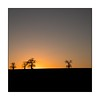 004/100x Square format (neals pics) Tags: winter sunset evening dusk trees treeline horizon silhouette sky orange golden field farmland farming suffolk 100xthe2018edition 100x2018 image4100
