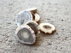 Bone Pieces (Robert Cowlishaw (Mertonian)) Tags: macro texture canonpowershotg1xmarkiii markiii g1x powershot canon backyardphotolab bypl robertcowlishaw mertonian concrete concretecanvas cement warm slices antlers