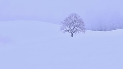 Winter Poetry (51/52 - 2017) (K M V) Tags: tree solitarytree snow winter white peace harmony solitude peaceofmind zen visualpoetry minimalism baum weiss schnee einsamkeit ruhe einklangmitnatur harmonie puu winterlandscape talvi lumi lunta hanki lumihanki valkoinenjoulu talvimaisema talvinenmaisema pelkistetty rauha minimalismi minimalistinen maisema träd vinter snö landskap vinterlandskap ro arbre solitaire paix lhiver neige paysagedhiver paysageenhiver paysageenblanc arbolo albero treeslookbetterwithoutleaves invierno linverno ilverno