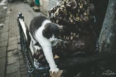 Friendly Ukrainian cat. (Jordi Corbilla Photography) Tags: jordi corbilla jordicorbillaphotography lviv ukraine cat streetphotography