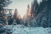The Melt (lifeless567) Tags: forest landscape sky sno wtree wood snow tree trees outdoor outdoors snowfall nature light sun sunset bright evening sset set walk travel adventure foliage beam ray united kingdom canon eos 70d peak district snake pass