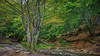 Down the slope (kud4ipad) Tags: 2017 ukraine zakarpattia tree stream smcpentaxda1645mmf40
