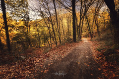 Walking on the wild (RuiFAFerreira) Tags: autumn beauty canon efs1018mmf4556isstm exterior golden light landscape mood natural nature national portugal park gerês uwa colors wide wood fall