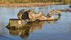 Waterlogged. (Cycling Saint) Tags: aylestonemeadows leicester floods nikond750nikkor70300f456vr