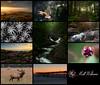 2017 Favorites (Matt Williams Gallery) Tags: mattwilliamsphotography nikon favorites 2017 2017favorites nature naturephotography northcarolinaphotographer northcarolina landscape landscapephotography fineartphotography collage