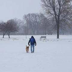 winter walk (humbletree) Tags: madisonwisconsin winter snow dog walking sony a7rii