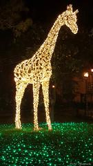 Lo Zoo che Vorrei (The Zoo I'd Want) (Mr. Bamboocha) Tags: 2017 giraffa giraffe italia italy lozoochevorrei lucidartista lucidartista2017 salerno thezooidwant villacomunale it