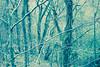 Blair. (elojeador) Tags: tronco rama árbol musgo humedad bosque bosqueencantado hojarasca aúnnolasví elojeador