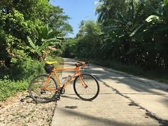Myanmar, Ayeyarwady Region, Pathein District, Kyaunggon Township, Min Ma Naing Village Tract (Die Welt, wie ich sie vorfand) Tags: myanmar burma bicycle cycling sepeda surly crosscheck ayeyarwadyregion ayeyarwady irrawaddy delta patheindistrict pathein kyaunggontownship kyaunggon minmanaing