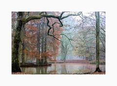 Brumes Foret de Rambouillet-3876 (helenea-78) Tags: arbres brumes forêt forêtderambouillet rambouillet refletssurleau trees eau reflets