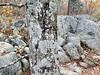 Lichen Covers Everything (EmperorNorton47) Tags: greatfallspark mclean virginia photo digital autumn fall lichen forest rocks tree texture