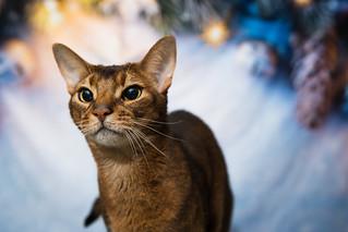 Luke - Christmas