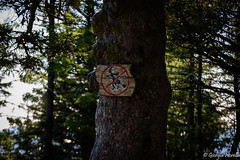 No witches (norella.giorgia) Tags: witches forest tree bergen norway albero streghe divieto norvegia nikon epifania d5500