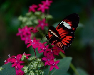 Litle wings...