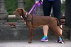 Leashed And Alert (swong95765) Tags: dog canine animal pet leashed cute alert focused