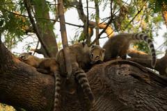 Bioparque Durazno (serranayaexiste) Tags: bioparque durazno uruguay zoológico reserva