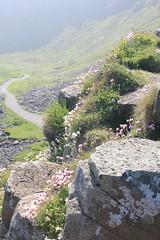 IMG_3430 (avsfan1321) Tags: ireland northernireland countyantrim unitedkingdom uk giantscauseway causewaycoast wildatlanticway basalt rock stone blackbasalt column columnarjointing columnarbasalt ocean atlanticocean landscape