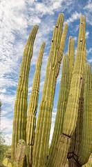 Desert Botanical Garden (davebentleyphotography) Tags: botanicalgarden davebentleyphotography desertbotanicalgarden 2017 arizona canon catus desert travel desertbotanicalgardenphoenix