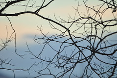 Winter sky 6.2.18 (viliris) Tags: sky branches winter norway oslo cold nature