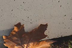 Autumn.  #autumn #concrete #canon1300d #tamronlens (riccardomichieletto1) Tags: tamronlens canon1300d concrete autumn