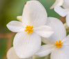 Blossoming soul (risaclics) Tags: make me smile 60mmmacro 7dw november2017 flora flowers ni makemesmile