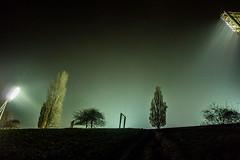 20171215-087 (sulamith.sallmann) Tags: pflanzen baum berlin botanik bäume deutschland fluter flutlicht germany licht lichter light mauerpark nacht nachtaufnahme nachts night nightshot pflanze plants tree deu sulamithsallmann