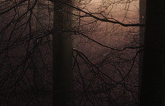 # catch the light # (Thomas Vanderheyden) Tags: light lumiere nature ngc beautifulearth arbre tree landscape paysage mood mystic ambiance atmosphere fog brume brouillard thomasvanderheyden fujifilm colors couleur lowkey france