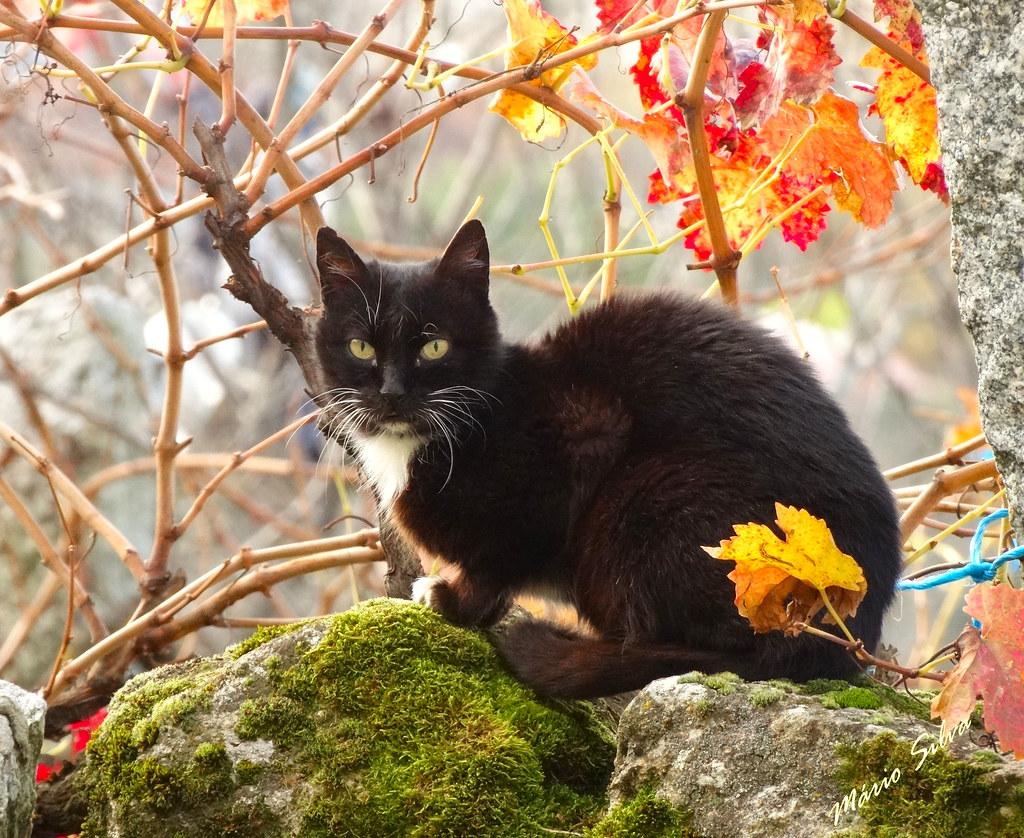 Águas Frias (Chaves) - ... gato posando para a foto ...