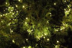 Un manto di verde e luci (Mauro.. take a look through my eyes) Tags: slovenia grad predjama castello erasmo