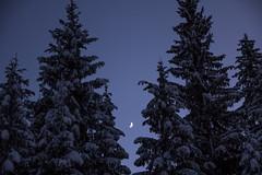 Luna (PicsbyGrega) Tags: belopeskajezera italija landscape winter zima belopeska italy canoneos60d sigma1750mmf28exdcos julijskealpe julianalps julijci gozd wood trees lagodifusine tarvisio trbiž