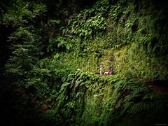 Nature Trip - Madeira, Portugal (Sebastian Bayer) Tags: olympus landschaft menschen madeira wald natur portugal bäume grün drausen pflanzen familie levada wandern omdem5ii personen weg omd jungel dschungel farn urlaub hund