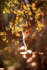 午後の猫 (sunuq) Tags: tokyo japan 日本 東京 canon eos 5dsr 猫 cat ペッツバール ロモグラフィ lomography zenit petzval 虹 rainbow