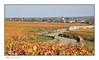 La route des vignes (Rémi Marchand) Tags: vignoble bourgogne beaune route canon5dmarkiii automne côtedor ville paysage landscape burgundylandscape paysagedecôtedor france côtedebeaune viticulture vineyardofburgundy paysagedebourgogne