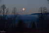 Chasing the Moon (SonjaPetersonPh♡tography) Tags: mapleridge mapleridgedykes bc britishcolumbia nikon nikond5300 canada trees dyke moon fog landscape scenery beauty nature pond creek frozen dusk scenic trails night nightsky silhouettes reflec water mountains goldenears goldenearsmountain