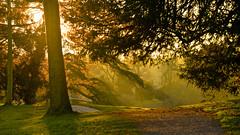 WINTER LIGHT AT  CROOME (chris .p) Tags: nikon d610 view capture winter december landscape croome nt nationaltrust 2017 light worcestershire england uk park