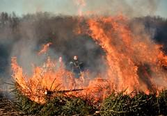 Die Tannenbäume werden verbrannt (simson60) Tags: tannenbaum feuerwehr feuer weihnachten bäume