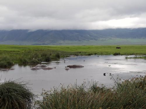 Flusspferd-Teich