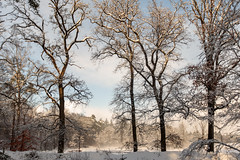 bij de kronkelweg ... (doevos) Tags: bos gelderland hogeveluwe npdhv nederland sneeuw veluwe winter forest neige snow woud