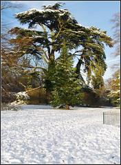 Daneholme Park (Lotsapix) Tags: daventry northamptonshire trees tree weather snow park daneholme daneholmepark