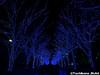 aonodokutsu009 (et_dslr_photo) Tags: xmas illumination 青の洞窟 shibuya yoyogi blueled night nightview nightshot hdr