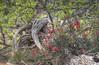 Veld Flowers (Coisroux) Tags: vegetation soil sand flowers trees bushes thorns wood kwandwe flora d5500 nikond fields bush