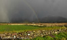 a day with hail showers and rainbows:) (Barbara Walsh Photography) Tags: rainbow ireland kerry dingle hail snow showers weather