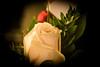 flower (pamelaadam) Tags: 2017 aberdeen digital autumn november fotolog thebiggestgroup flower rose work nhs